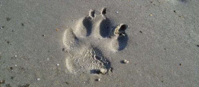 Urlaub Hund Sardinien