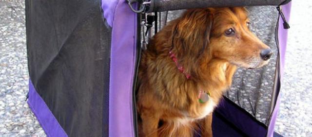 Foto Hund im Reisekorb
