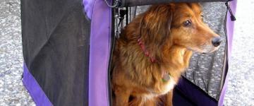IMG Fähre Sardinien mit Hund  - Kabinen, Dokumente und Tipps